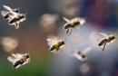Chính tả: Hành trình của bầy ong trang 125 sgk Tiếng Việt lớp 5