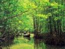 Soạn bài tập đọc: Rừng ngập mặn trang 128 SGK Tiếng Việt 5 tập 1