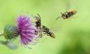 Soạn bài tập đọc: Hành trình của bầy ong trang 118 sgk Tiếng Việt lớp 5
