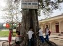 Em hãy tả một cây cho bóng mát ở trường em