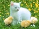 Hãy tả con mèo nhà em (bài làm 2)
