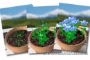 Bài 3- Ở vườn các luống hoa (chậu hoa) nở bông rất đẹp. Hãy tả một cây bông mà em thích nhất