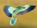 Tả chim Anh vũ