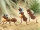 Tả đàn kiến vàng