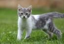 Tả hình dáng và hoạt động của con mèo nhà em