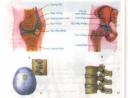 Bài 1 trang 27 SGK Sinh 8