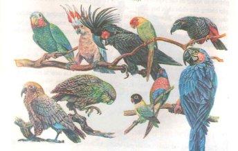 Mở đầu : Thế giới động vật đa dạng và phong phú – Hướng dẫn giải bài tập Sinh học 7 trang 8
