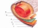 Bài 1,2,3,4,5 Sinh 11 trang 138