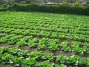 Tả vườn rau nơi em ở bài 2
