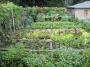 Tả vườn rau (hoặc vườn hoa) nơi em ở bài 1