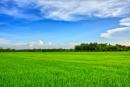 Tả cảnh buổi sáng trên cánh đồng làng em bài 2