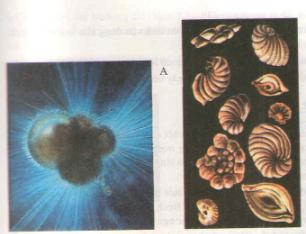 Đặc điểm chung và vai trò thực tiễn của động vật nguyên sinh