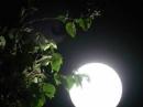 Phân tích vẻ đẹp của bài thơ Ngắm trăng của Hồ Chí Minh