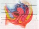 Câu 1 trang 192 sgk sinh lớp 8