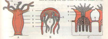 Đặc điểm chung và vai trò của ngành ruột khoang