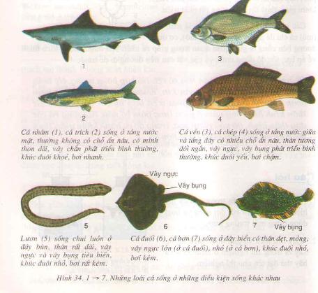 Đa dạng và đặc điểm chung của các lớp cá
