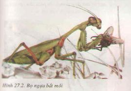 Đa dạng và đặc điểm chung của lớp sâu bọ