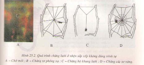Nhện và sự đa dạng của lớp hình nhện