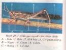 Bài 1, 2, 3 trang 88 sgk sinh học 7