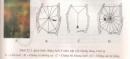 Bài 1, 2, 3 trang 85 sgk sinh học 7