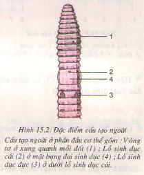 Chương I: Các ngành giun – Giun đất – Hướng dẫn giải bài tập Sinh học 7 trang 55