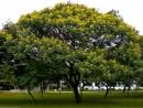 Em hãy tả một cây có bóng mát