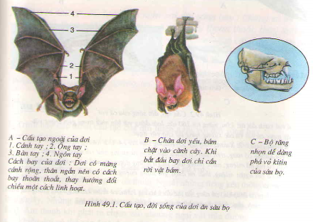 Đa dạng của lớp thú bộ dơi và bộ cá voi