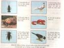 Bài 1, 2 trang 198 sgk sinh học 7