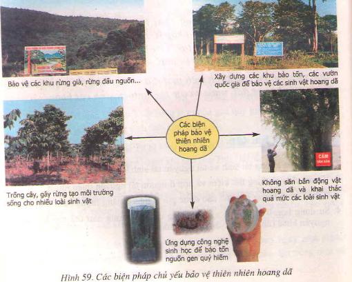 Khôi phục môi trường và giữ gìn thiên nhiên hoang dã