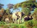 Chính tả hội đua voi ở Tây Nguyên