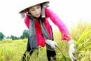 Luyện từ và câu kể Ai làm gì? trang 6 SGK Tiếng Việt 4 tập 2