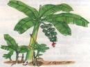 Tập làm văn: Ôn tập về tả cây cối trang 96 SGK Tiếng Việt 5 tập 2