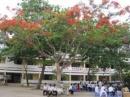 Tập làm văn: Tả cây cối (Kiểm tra viết) trang 99 SGK Tiếng Việt 5 tập 2