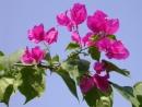 Tập làm văn: Luyện tập xây dựng mở bài trong bài văn miêu tả cây cối