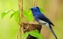 Chính tả Nghe lời chim nói