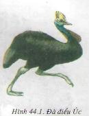 Đa dạng và đặc điểm chung của lớp chim