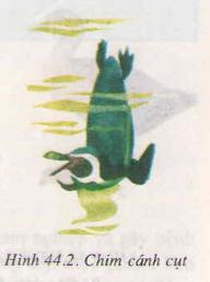 Chương VI : Ngành động vật có xương sống – Đa dạng và đặc điểm chung của lớp chim – Hướng dẫn giải bài tập SGK Sinh học 7 trang 146