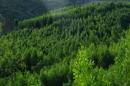 Rừng xà nu cho ta thấy rõ sức sông bất diệt của thiên nhiên và con người Tây Nguyên - Ngữ Văn 12
