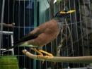 Tập làm văn: Tả về một loài chim trang 30 SGK Tiếng Việt 2 tập 2