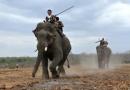 Chính tả Ngày hội đua voi ở Tây Nguyên trang 48 SGK Tiếng Việt 2 tập 2