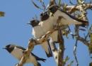 Soạn bài Thông báo của thư viện vườn chim trang 26 SGK Tiếng Việt 2 tập 2