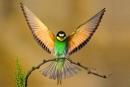 Luyện từ và câu: Mở rộng vốn từ: từ ngữ về chim chóc trang 27 SGK Tiếng Việt 2 tập 2