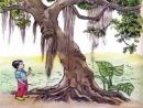 Soạn bài Cậu bé và cây si già trang 96 SGK Tiếng Việt 2 tập 2