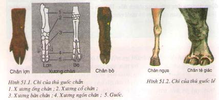 Đa dạng của lớp thú các bộ móng guốc và bộ linh trưởng