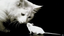 Short story: Cat and mouse 4 trang 72,73 SGK Tiếng Anh lớp 3