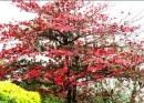 Em hãy tả một cây bàng đang đổi lá giữa mùa thu
