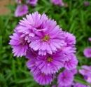 Hãy viết một bài văn miêu tả về loài hoa - vẻ đẹp của thiên nhiên