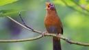 Kể một câu chuyện nói về một loài chim