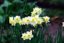 Thuyết minh về một loại hoa, loài cây mà em yêu thích