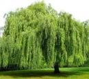Vẻ đẹp của cây